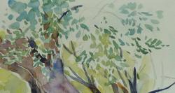 Old_olive_treeT